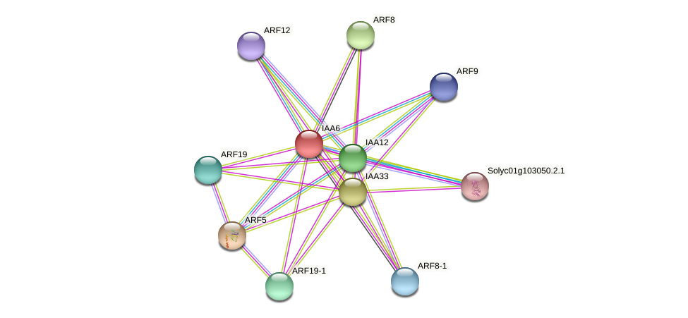 IAA6 protein (Solanum lycopersicum) - STRING interaction network