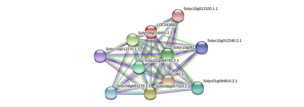 LOC543683 protein (Solanum lycopersicum) - STRING interaction network