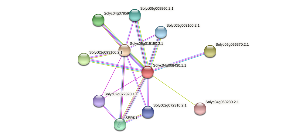 Solyc04g008430.1.1 protein (Solanum lycopersicum) - STRING interaction network