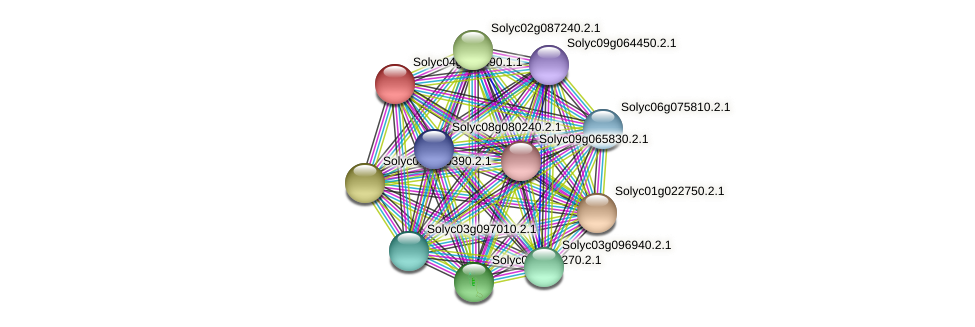 Solyc04g008490.1.1 protein (Solanum lycopersicum) - STRING interaction network