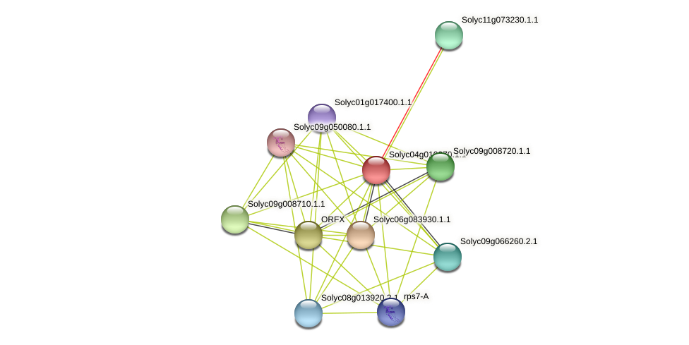 Solyc04g010270.1.1 protein (Solanum lycopersicum) - STRING interaction network