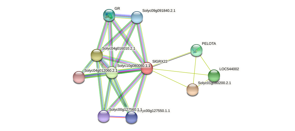101250592 protein (Solanum lycopersicum) - STRING interaction network