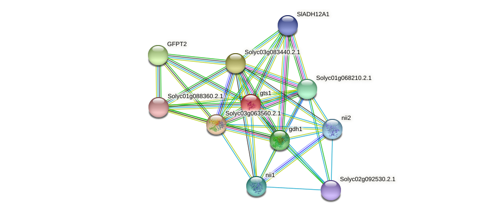 gts1 protein (Solanum lycopersicum) - STRING interaction network