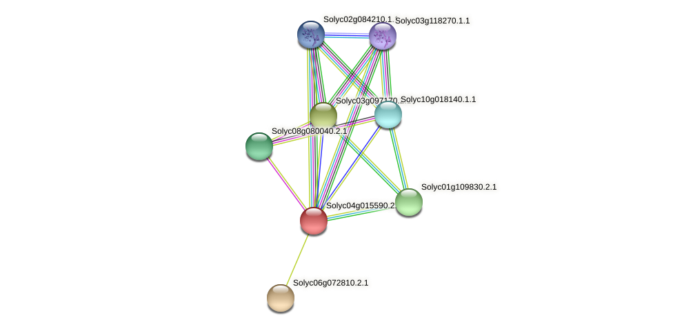 Solyc04g015590.2.1 protein (Solanum lycopersicum) - STRING interaction network