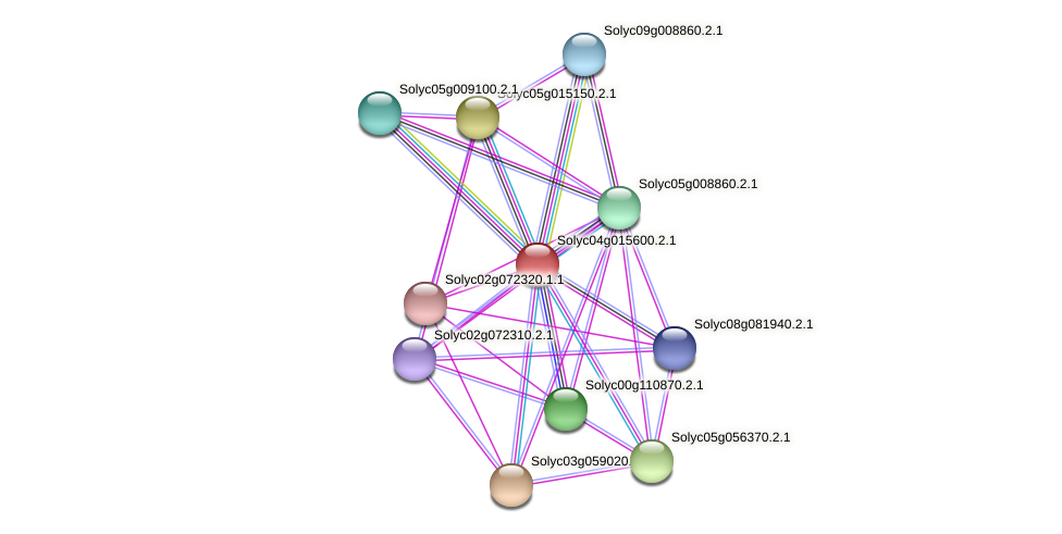 Solyc04g015600.2.1 protein (Solanum lycopersicum) - STRING interaction network