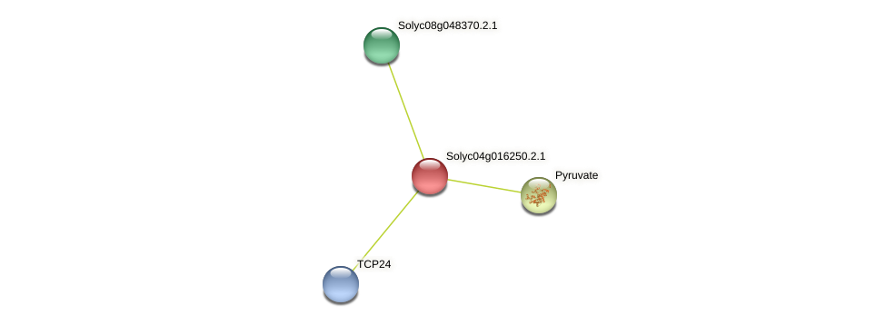 Solyc04g016250.2.1 protein (Solanum lycopersicum) - STRING interaction network