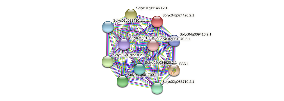 Solyc04g024420.2.1 protein (Solanum lycopersicum) - STRING interaction network