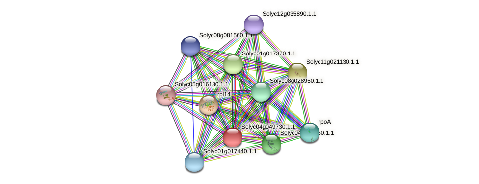 Solyc04g049730.1.1 protein (Solanum lycopersicum) - STRING interaction network