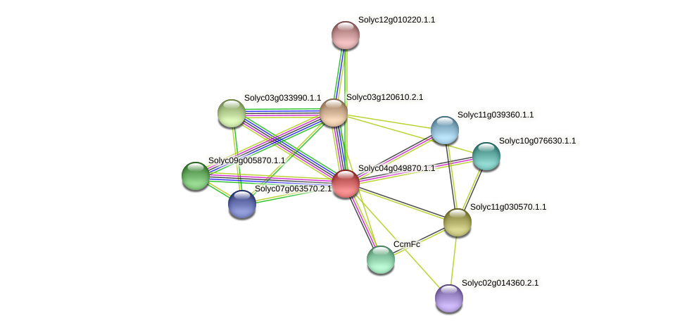 Solyc04g049870.1.1 protein (Solanum lycopersicum) - STRING interaction network