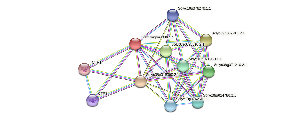 Solyc04g049990.1.1 protein (Solanum lycopersicum) - STRING interaction network