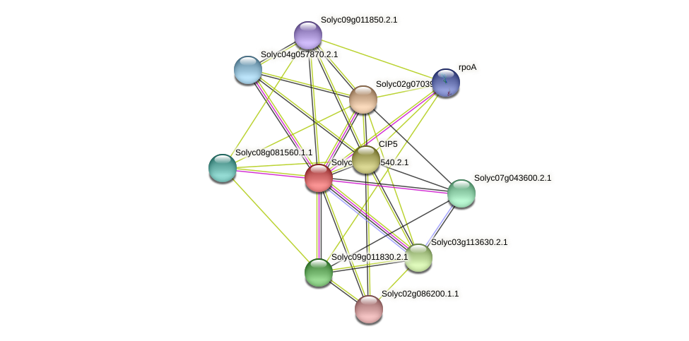 101246046 protein (Solanum lycopersicum) - STRING interaction network