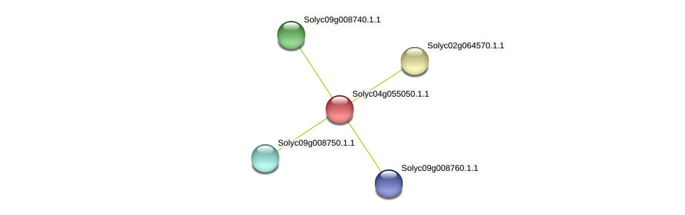 Solyc04g055050.1.1 protein (Solanum lycopersicum) - STRING interaction network
