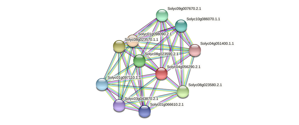 101257760 protein (Solanum lycopersicum) - STRING interaction network