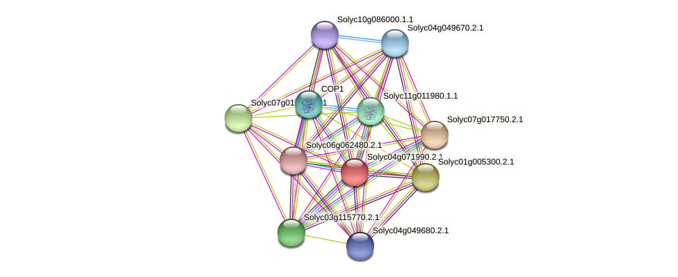 Solyc04g071990.2.1 protein (Solanum lycopersicum) - STRING interaction network