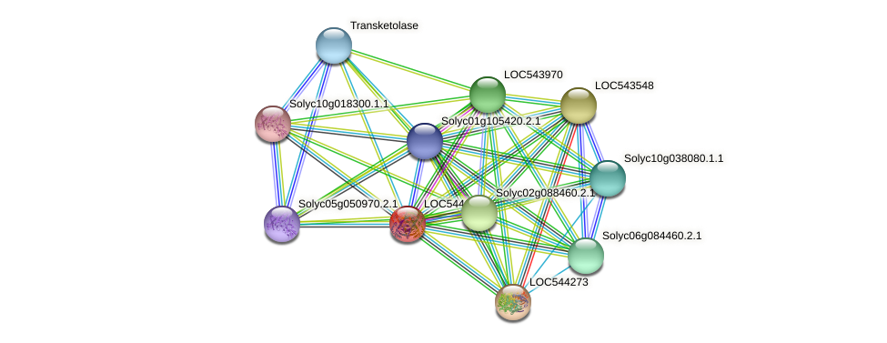 LOC544153 protein (Solanum lycopersicum) - STRING interaction network