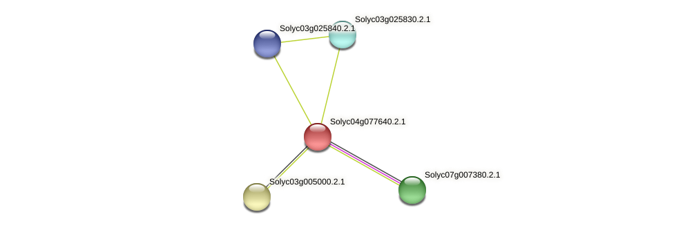 Solyc04g077640.2.1 protein (Solanum lycopersicum) - STRING interaction network