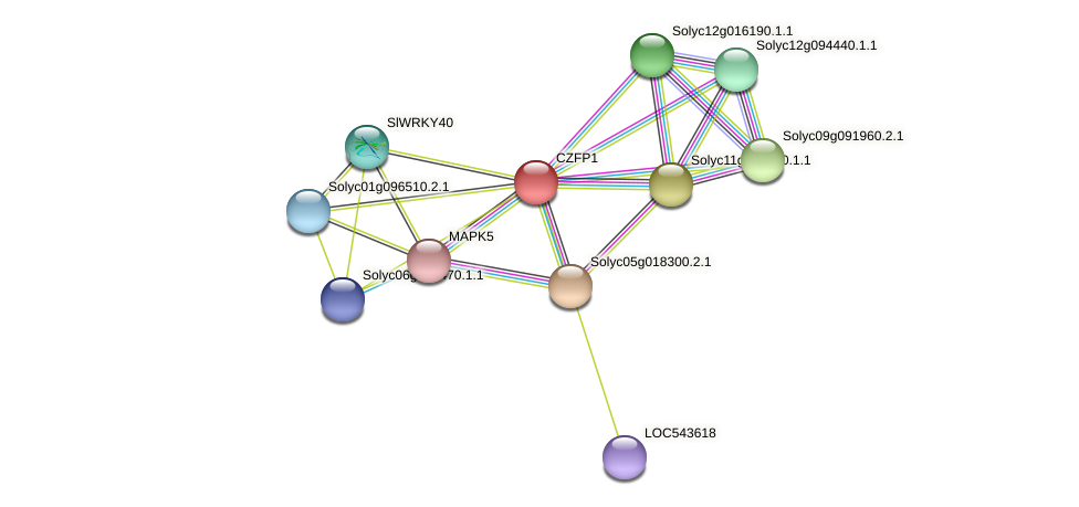 CZFP1 protein (Solanum lycopersicum) - STRING interaction network