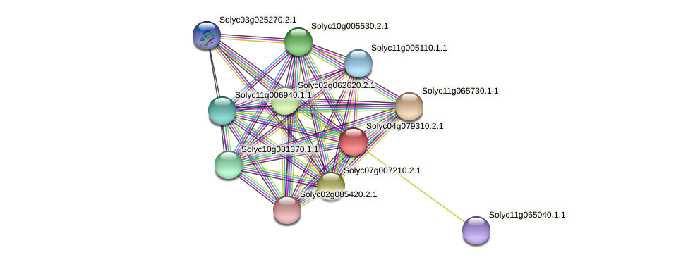 Solyc04g079310.2.1 protein (Solanum lycopersicum) - STRING interaction network