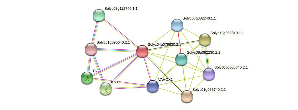 Solyc04g079830.2.1 protein (Solanum lycopersicum) - STRING interaction network