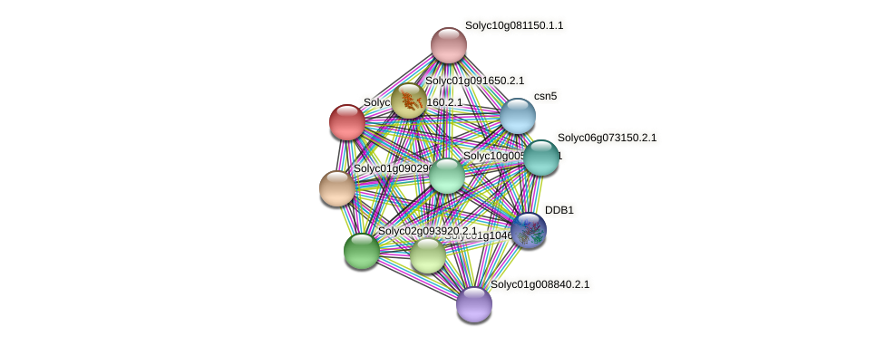 Solyc04g080160.2.1 protein (Solanum lycopersicum) - STRING interaction network