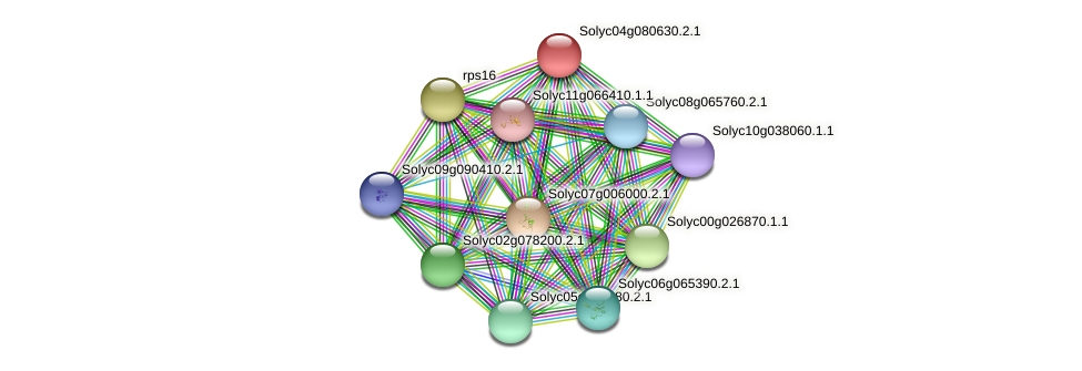 Solyc04g080630.2.1 protein (Solanum lycopersicum) - STRING interaction network