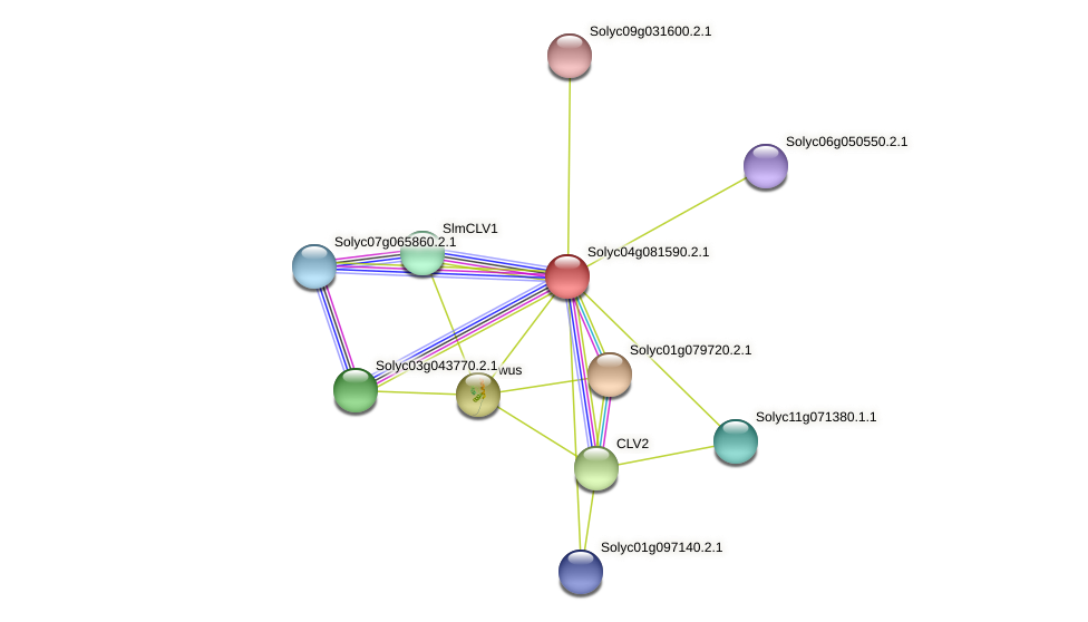 Solyc04g081590.2.1 protein (Solanum lycopersicum) - STRING interaction network