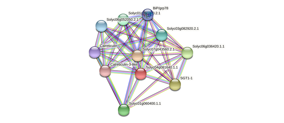 Solyc04g081640.1.1 protein (Solanum lycopersicum) - STRING interaction network
