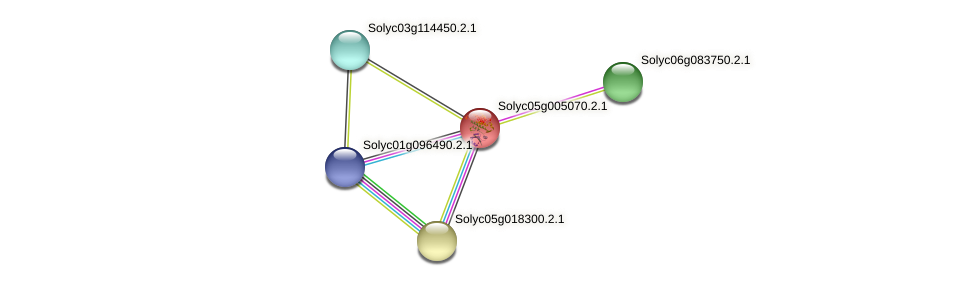 Solyc05g005070.2.1 protein (Solanum lycopersicum) - STRING interaction network