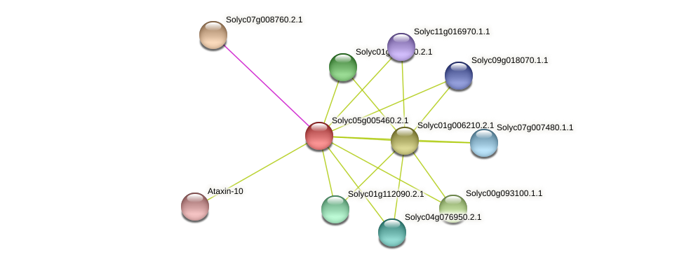 Solyc05g005460.2.1 protein (Solanum lycopersicum) - STRING interaction network