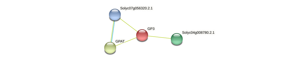 GP3 protein (Solanum lycopersicum) - STRING interaction network