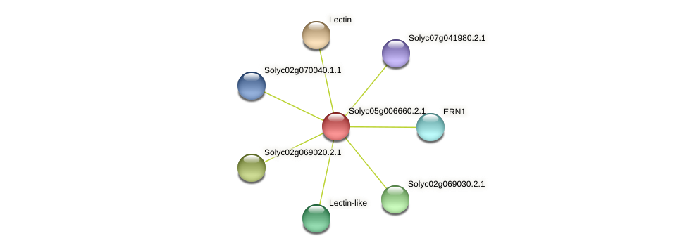 Solyc05g006660.2.1 protein (Solanum lycopersicum) - STRING interaction network