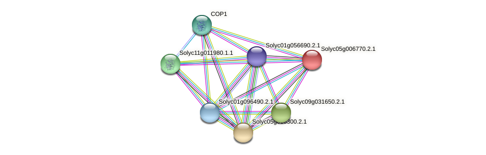 Solyc05g006770.2.1 protein (Solanum lycopersicum) - STRING interaction network
