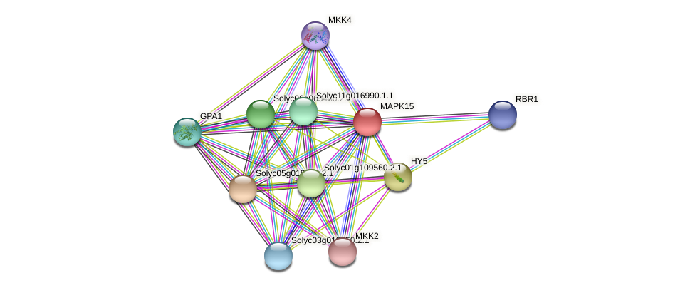 MAPK15 protein (Solanum lycopersicum) - STRING interaction network