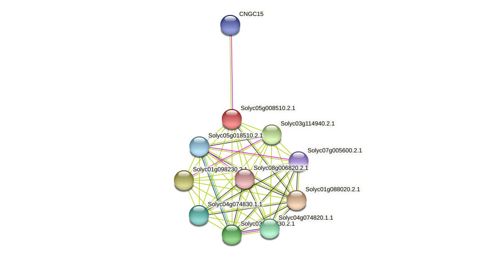 Solyc05g008510.2.1 protein (Solanum lycopersicum) - STRING interaction network