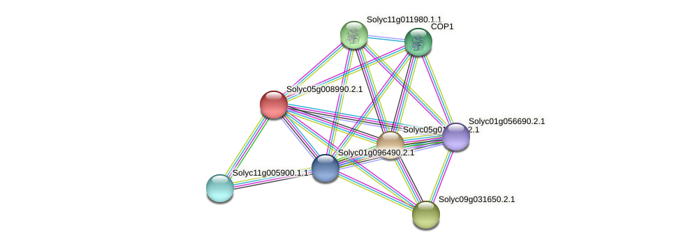 Solyc05g008990.2.1 protein (Solanum lycopersicum) - STRING interaction network