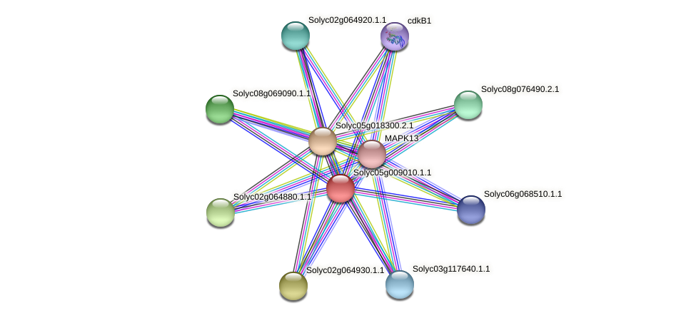 Solyc05g009010.1.1 protein (Solanum lycopersicum) - STRING interaction network