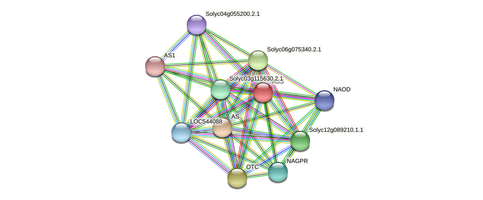 ASS protein (Solanum lycopersicum) - STRING interaction network