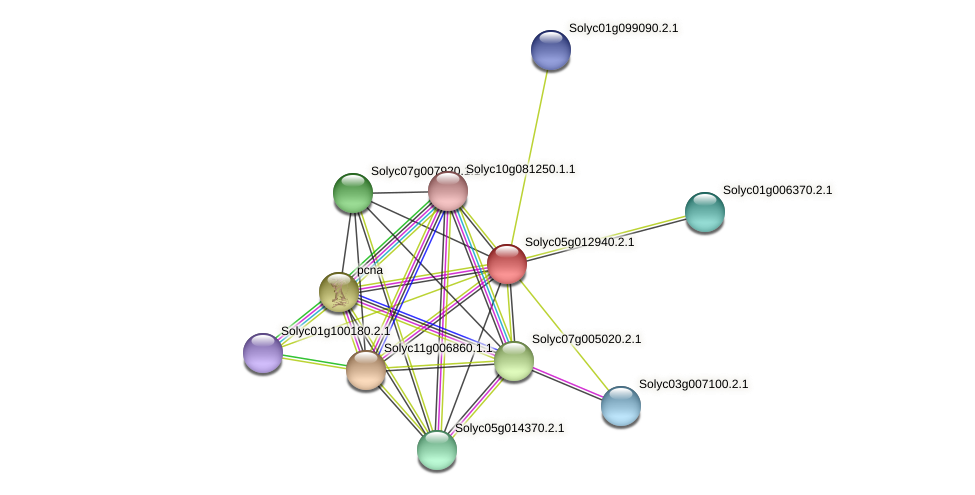 Solyc05g012940.2.1 protein (Solanum lycopersicum) - STRING interaction network