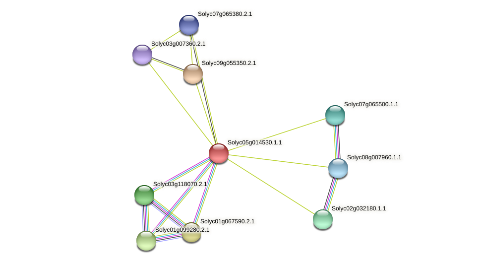 Solyc05g014530.1.1 protein (Solanum lycopersicum) - STRING interaction network