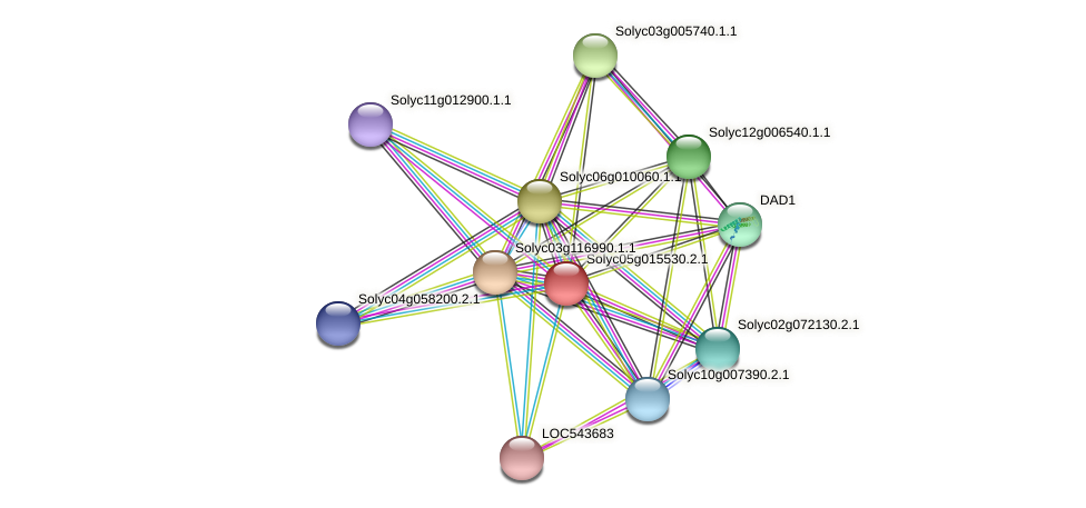 Solyc05g015530.2.1 protein (Solanum lycopersicum) - STRING interaction network