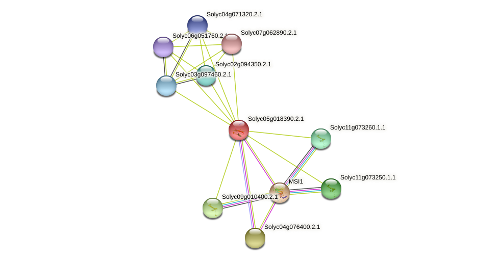 Solyc05g018390.2.1 protein (Solanum lycopersicum) - STRING interaction network