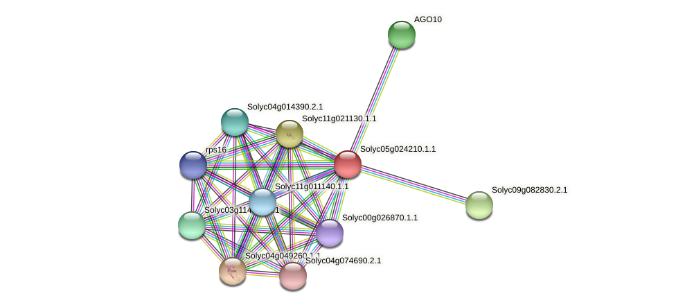 Solyc05g024210.1.1 protein (Solanum lycopersicum) - STRING interaction network