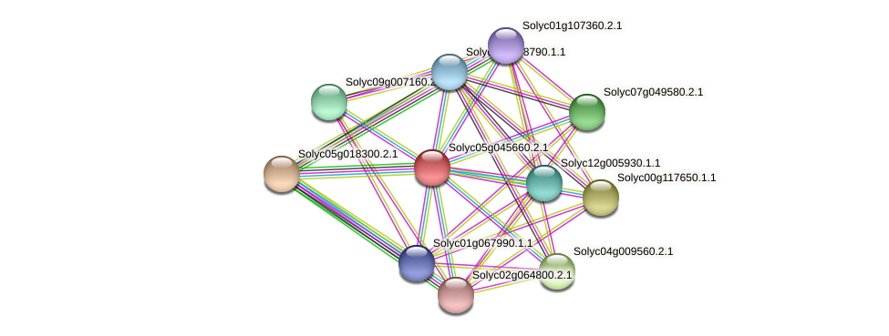 Solyc05g045660.2.1 protein (Solanum lycopersicum) - STRING interaction network