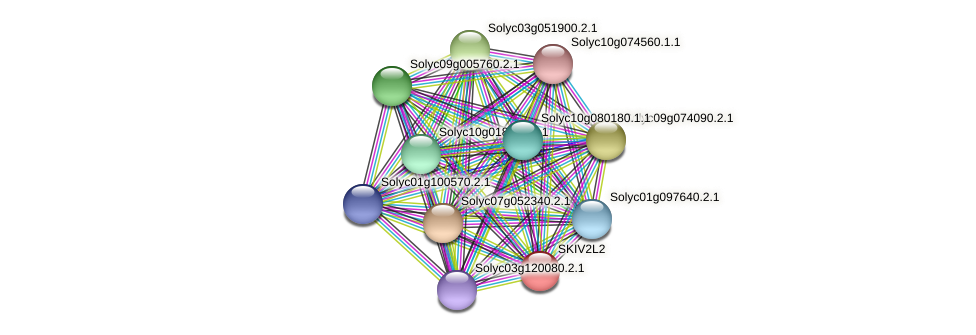 SKIV2L2 protein (Solanum lycopersicum) - STRING interaction network