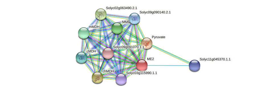 ME2 protein (Solanum lycopersicum) - STRING interaction network
