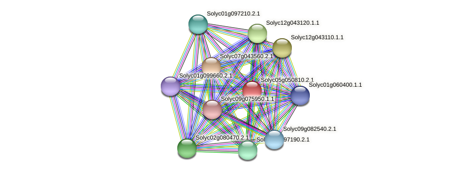 Solyc05g050810.2.1 protein (Solanum lycopersicum) - STRING interaction network