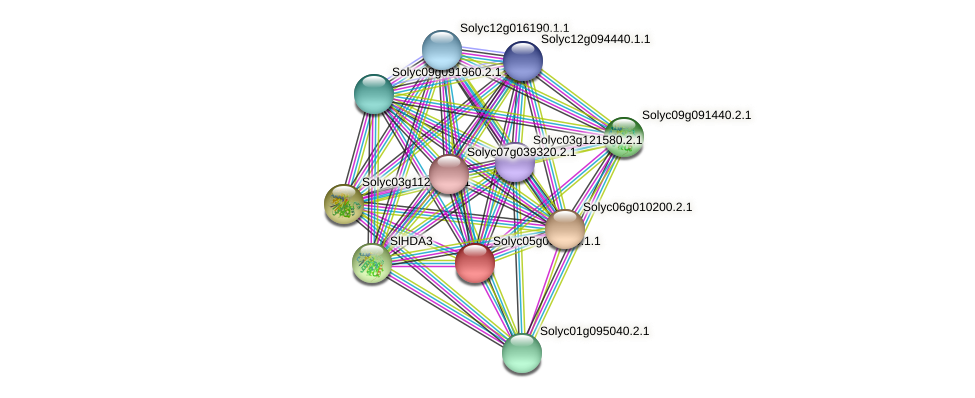 Solyc05g051110.1.1 protein (Solanum lycopersicum) - STRING interaction network