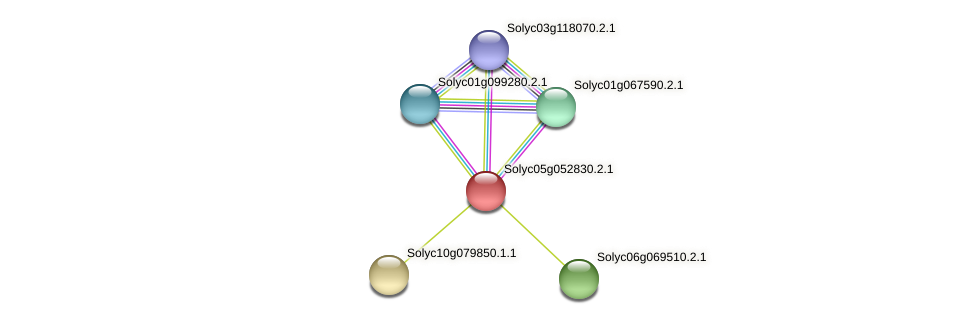 Solyc05g052830.2.1 protein (Solanum lycopersicum) - STRING interaction network