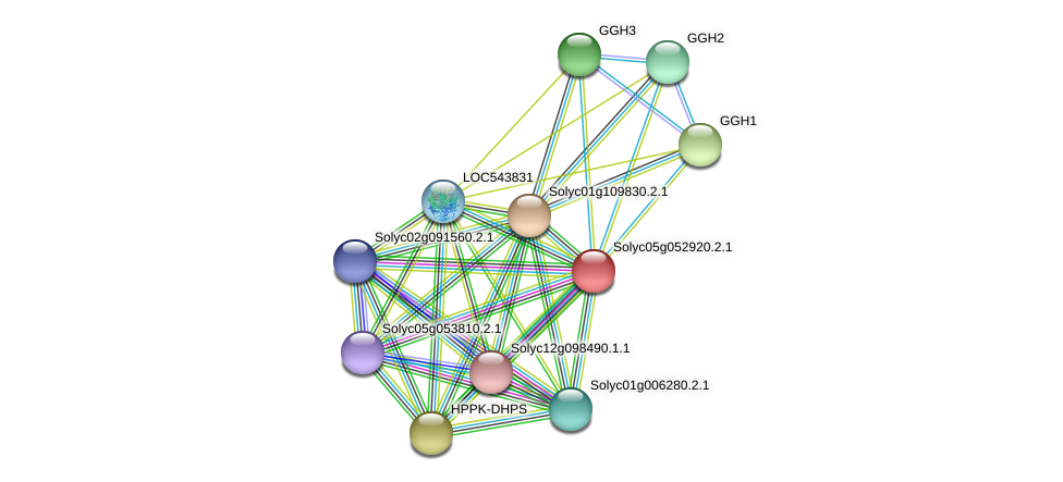 Solyc05g052920.2.1 protein (Solanum lycopersicum) - STRING interaction network
