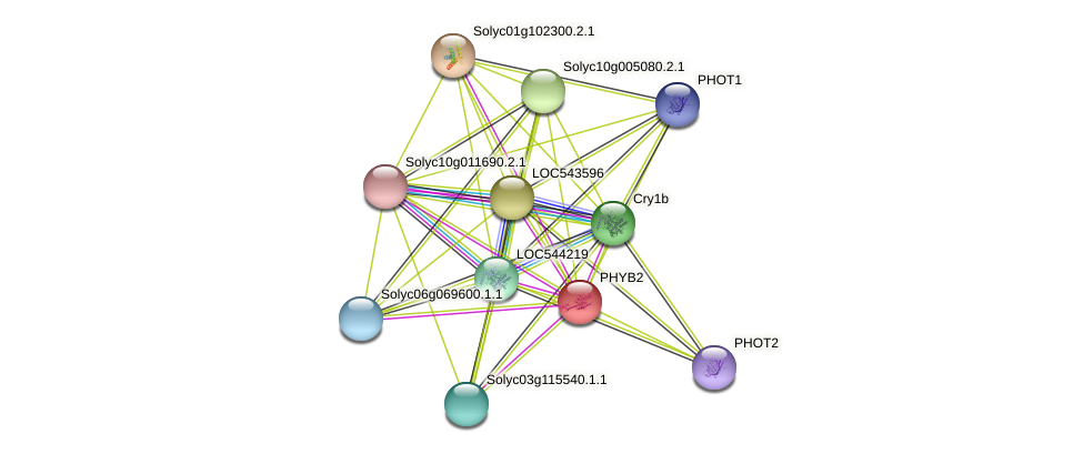PHYB2 protein (Solanum lycopersicum) - STRING interaction network